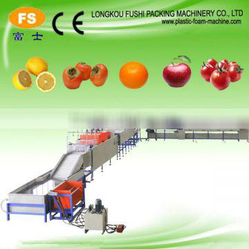 High Quality Fruit & Vegetable Washing Waxing and Sorting Machine